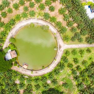 Phuket Fishing Park Drone View